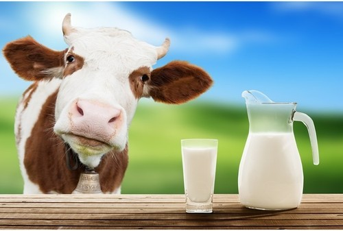 Is dairy a good source of calcium